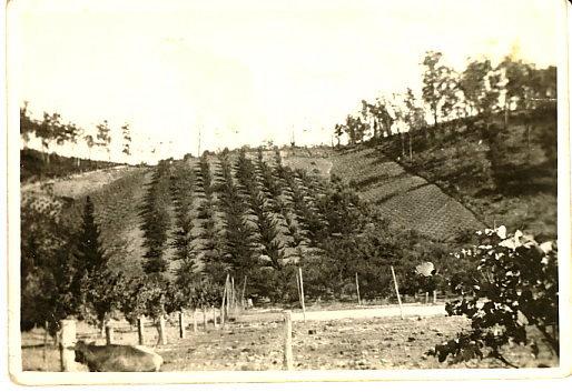 View across Swamp Road Lenswood towards Schultz property