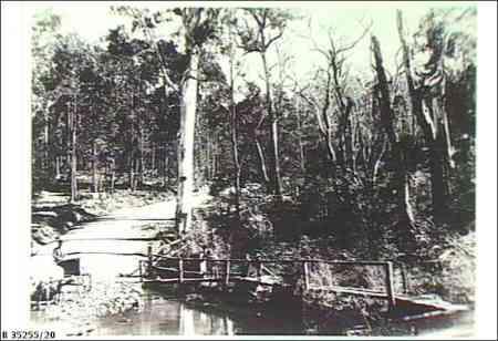 Forest Range Road [B 35255/20] • Photograph - 1893, SLSA